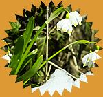 Frühling badget