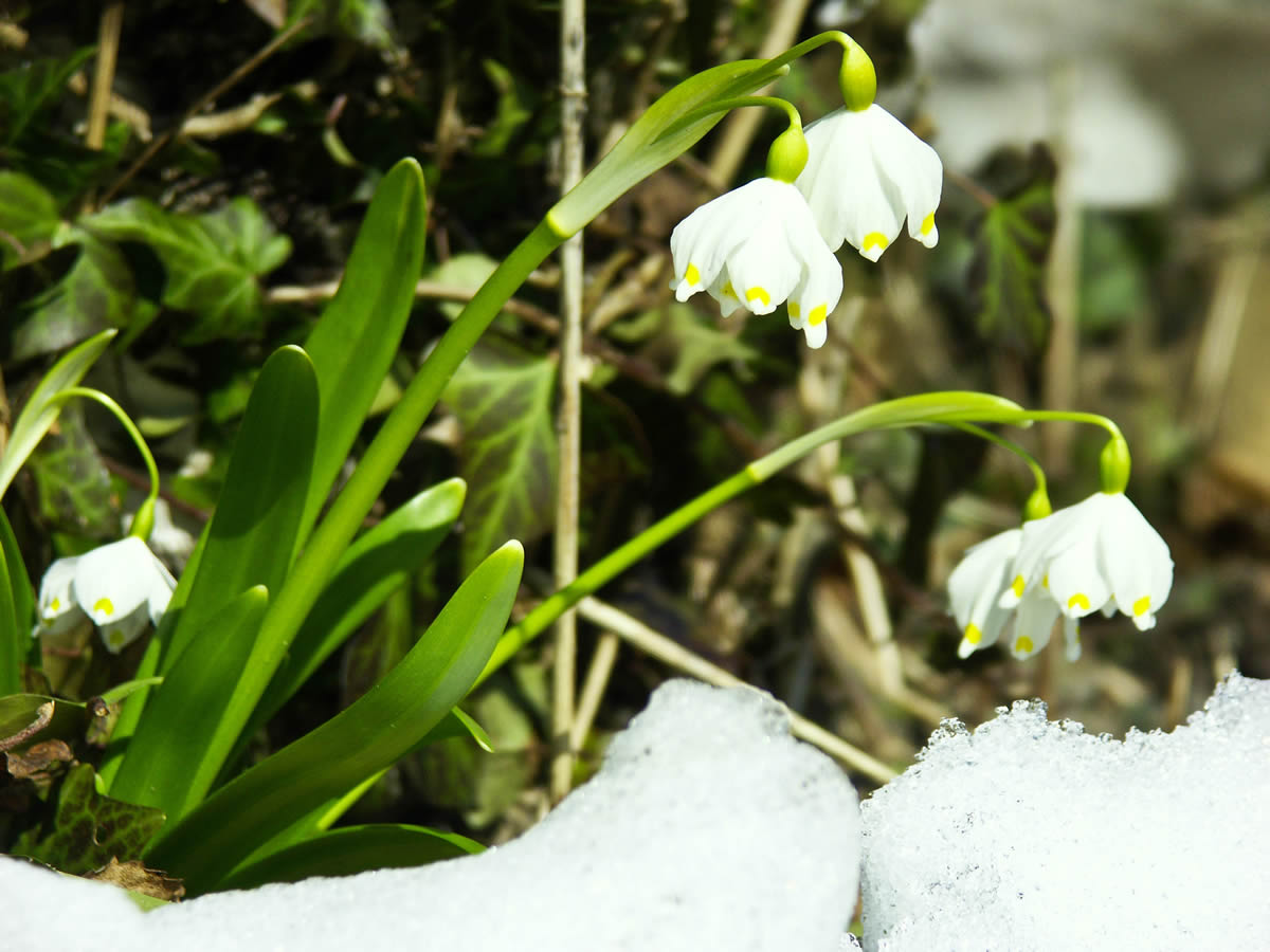 März Angebot  – Frühling im Rusticana